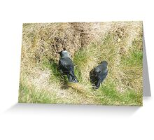 Jackdaws In The Grass Greeting Card