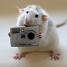 Its not easy being a good photographer! by Ellen van Deelen