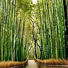 Big Bamboo Forest by Carlton Grooms