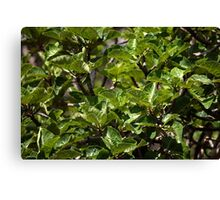 Warka Tree Leaves Canvas Print