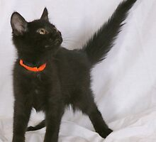 Adoptable Kitten by rhaworth