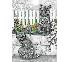 """Zen Cats"" Photographic Print"