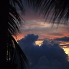 Sunset Through A Palm Leaf by Carol Barona