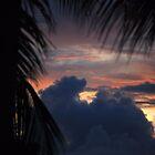 Sunset Through A Palm Leaf by Carol Barona