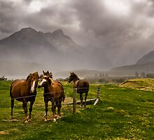 Three horses awaiting an approaching storm  by peterwey
