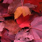 Red Leaf by lilac