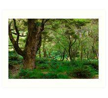 primeval forest on routeburn track Art Print
