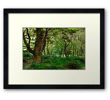 primeval forest on routeburn track Framed Print