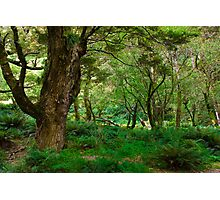primeval forest on routeburn track Photographic Print