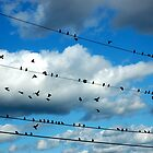 Live Wires by christiane