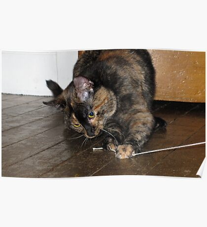 Tortoiseshell cat playing with string Poster