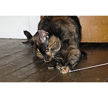 Tortoiseshell cat playing with string Photographic Print