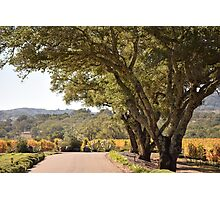 Drive through the vineyard Photographic Print