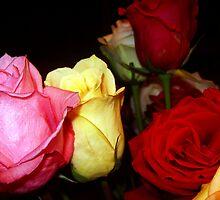 My Roses 8 by Mariam Muradian