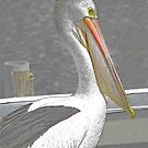 Pelican Portrait. by George Petrovsky