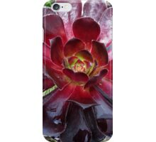 Black Beauty - Aeonium Schwarzkopf Blossoms with Raindrops   iPhone Case/Skin