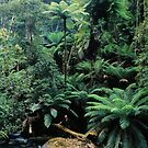 Rainforest, East Gippsland. by Ern Mainka