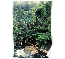 Rainforest, East Gippsland. Poster