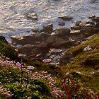North Shore June by M G  Pettett