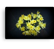 Daffodils Reaching Out Canvas Print