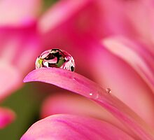PINK Collection for the Cure - Reflecting Tears  by trwphotography