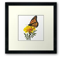 Monarch Butterfly on Marigold Framed Print
