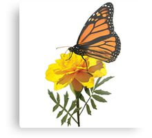 Monarch Butterfly on Marigold Metal Print