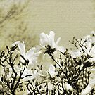 Magnolia Branch by Kathy Nairn