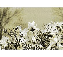 Magnolia Branch Photographic Print