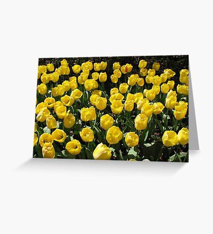 Golden Dreams - Tulips in the Keukenhof Gardens Greeting Card