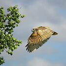 First flight, escape to the leaves... by Normcar