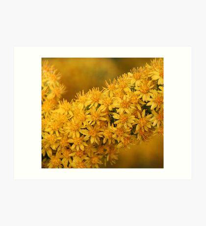 Thousands of tiny yellow flowers Art Print