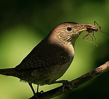 Anyone For Cricket? by John Absher