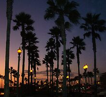 "Palm Skies Night by Lenora ""Slinky"" Regan"