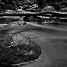 In the Stream of Life by FuriousEnnui