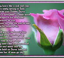 Pink Love Rose by Donna Adamski