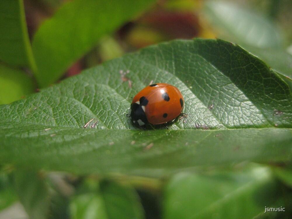 Ladybug Closeup by jsmusic