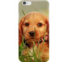 puppy sitting in high grass iPhone Case/Skin