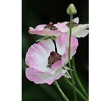 delicate ones Photographic Print
