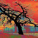 NATURAL BEAUTY by DarrellMoseley