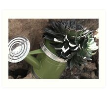 Succulant Watering Can Art Print