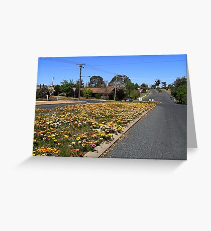 Gazania Streetscape Greeting Card