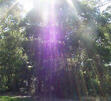 Heavenly Rays by Carol Field