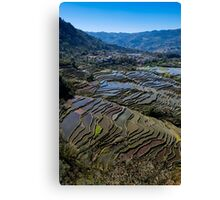 Rice Terraces of Yuanyang Canvas Print