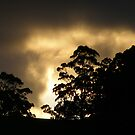 """explosion"" of light from the dying sun,  Tasmania by gaylene"