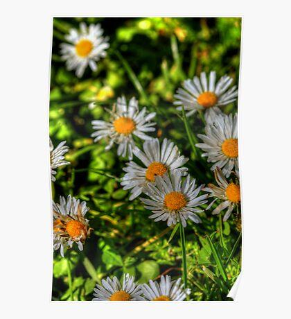 Flowering Lawn Poster