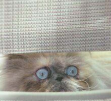 Peek-a-boo by Gloria Abbey