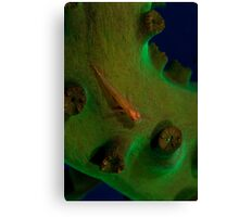 Red fish on green coral (macro) Canvas Print