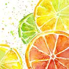 Citrus Watercolor by OlechkaDesign