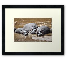 Hippos in The Mara Framed Print